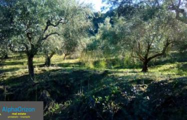 Αγροτεμάχιο 15500 τ.μ., Πεταλίδι, Μεσσηνία, € 60.000