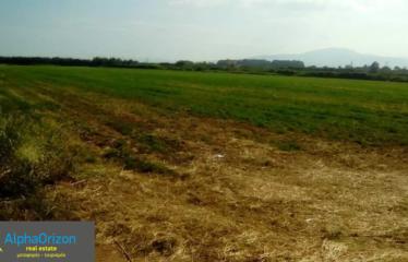 Αγροτεμάχιο 21000 τ.μ., Μεσσήνη, Μεσσηνία, € 230.000