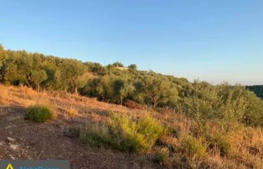 Αγροτεμάχιο 27000 τ.μ., Δάφνη, Πεταλίδι, € 215.000