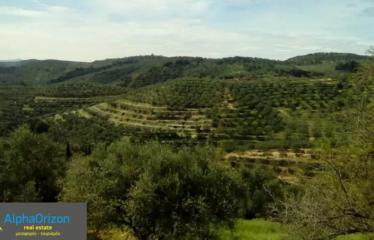 Αγροτεμάχιο 75000 τ.μ., Μάνεσης, Αριστομένης, € 300.000