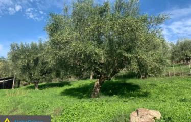 Αγροτεμάχιο 13000 τ.μ., Κέντρο, Αριστομένης, € 16.000