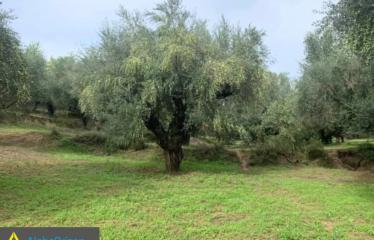 Αγροτεμάχιο 4500 τ.μ., Αμφιθέα, Ανδρούσα, € 16.000