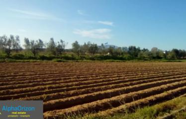 Αγροτεμάχιο 22000 τ.μ., Κέντρο, Μεσσήνη, € 440.000