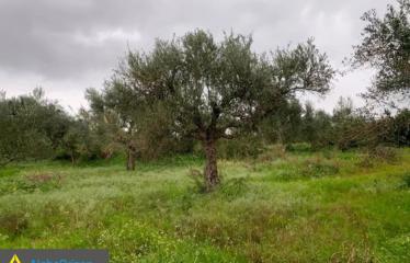 Αγροτεμάχιο 7000 τ.μ., Κρεμμύδια, Χιλιοχώρια, € 25.000