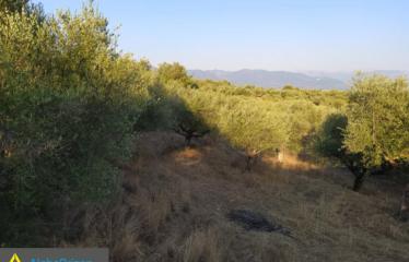Αγροτεμάχιο 3000 τ.μ., Ελληνοεκκλησία, Ανδρούσα, € 8.000