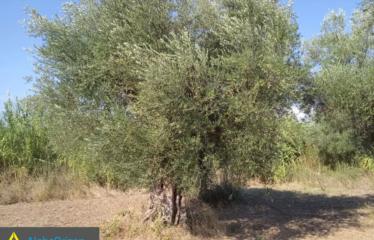 Αγροτεμάχιο 2500 τ.μ., Εύα, Ανδρούσα, € 5.500