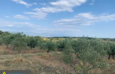 Αγροτεμάχιο 10000 τ.μ., Κορομηλιά, Τρίκορφο, € 13.000