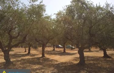Αγροτεμάχιο 4000 τ.μ., Μάδενα, Μεσσήνη, € 16.000