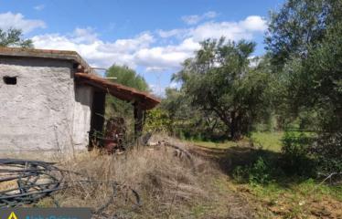Αγροτεμάχιο 14000 τ.μ., Ανάληψη, Μεσσήνη, € 170.000