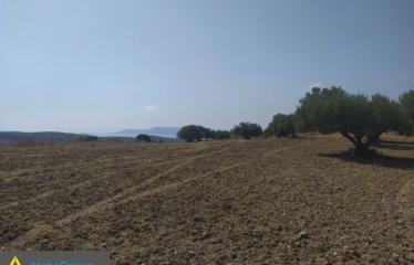 Αγροτεμάχιο 5250 τ.μ., Τάπια, Μεθώνη, € 190.000