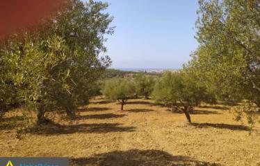Αγροτεμάχιο 31500 τ.μ., Μεθώνη, Μεσσηνία, € 250.000