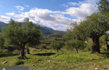 Αγροτεμάχιο 9500 τ.μ., Αρσινόη, Ιθώμης, € 27.000