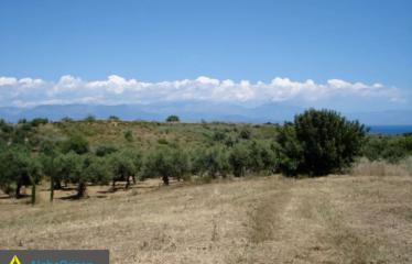 Αγροτεμάχιο 4700 τ.μ., Καλαμάκι, Πεταλίδι, € 95.000
