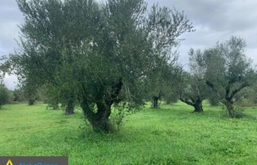 Αγροτεμάχιο 15000 τ.μ., Μαυροζούμι, Μελιγαλά, € 40.000