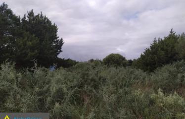 Οικόπεδο 4000 τ.μ., Πετροχώρι, Νέστορας, € 400.000
