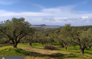 Αγροτεμάχιο 70000 τ.μ., Σχινόλακκα, Πύλος, € 2.100.000