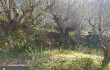 Αγροτεμάχιο 14000 τ.μ., Σπιτάλι, Μεσσήνη, € 18.000