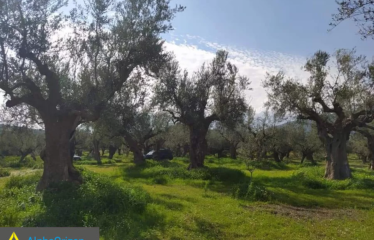 Αγροτεμάχιο 5700 τ.μ., Βαλύρα, Ιθώμης, € 12.500
