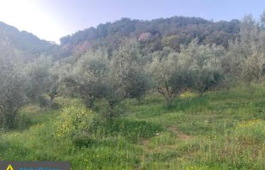 Αγροτεμάχιο 19700 τ.μ., Νερόμυλος, Πεταλίδι, € 60.000
