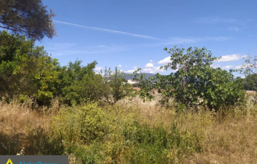 Οικόπεδο 6500 τ.μ., Λουτρά, Μεσσήνη, € 130.000