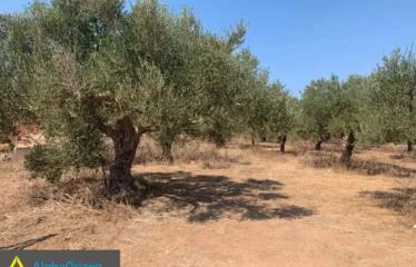 Αγροτεμάχιο 30000 τ.μ., Ρίκια, Γαργαλιάνοι, € 1.500.000