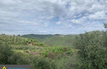 Αγροτεμάχιο 13000 τ.μ., Καρνάσιο, Ανδανία, € 22.000