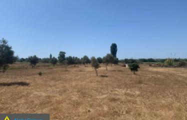 Αγροτεμάχιο 5300 τ.μ., Μεσσήνη, Μεσσηνία, € 15.000